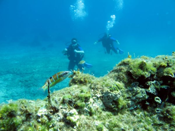 diving-09