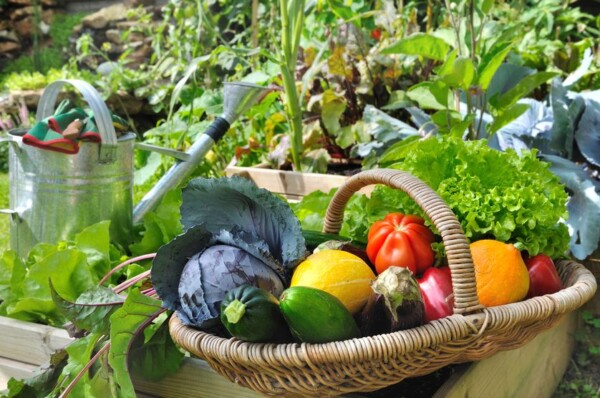 basket-fresh-vegetables.jpg.838x0_q80