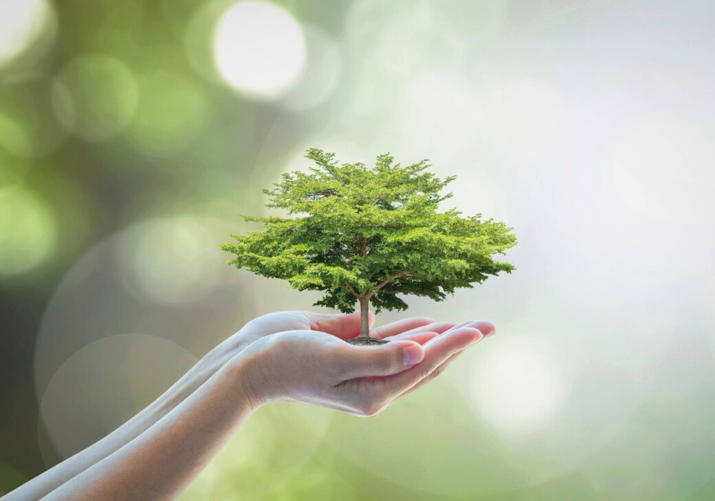bigstock-Growing-Tree-To-Save-Ecologica-224439409 (1)